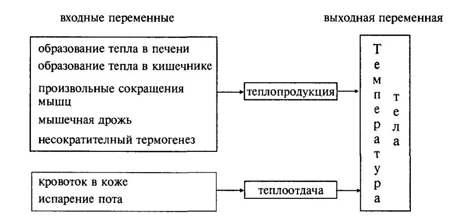 Система регуляции температуры тела