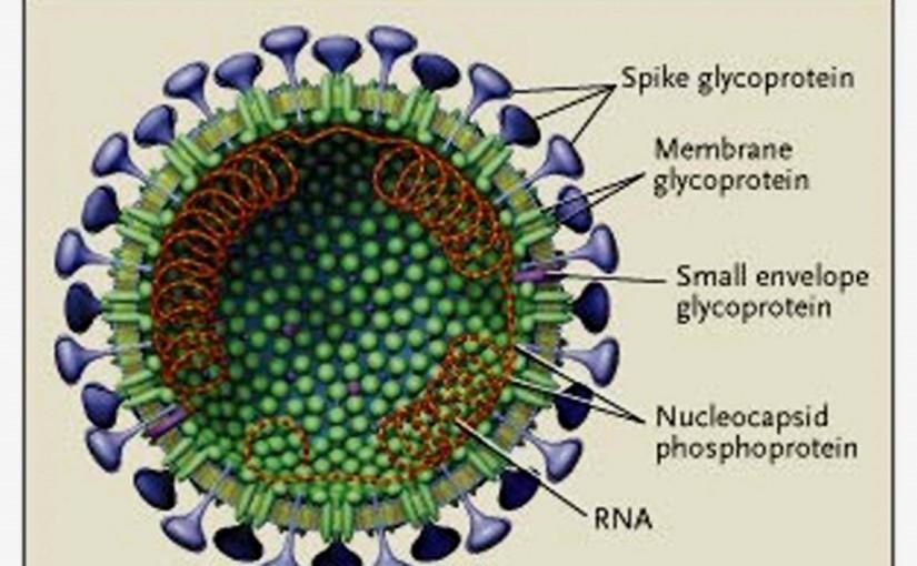 schematic_sars_coronavirus