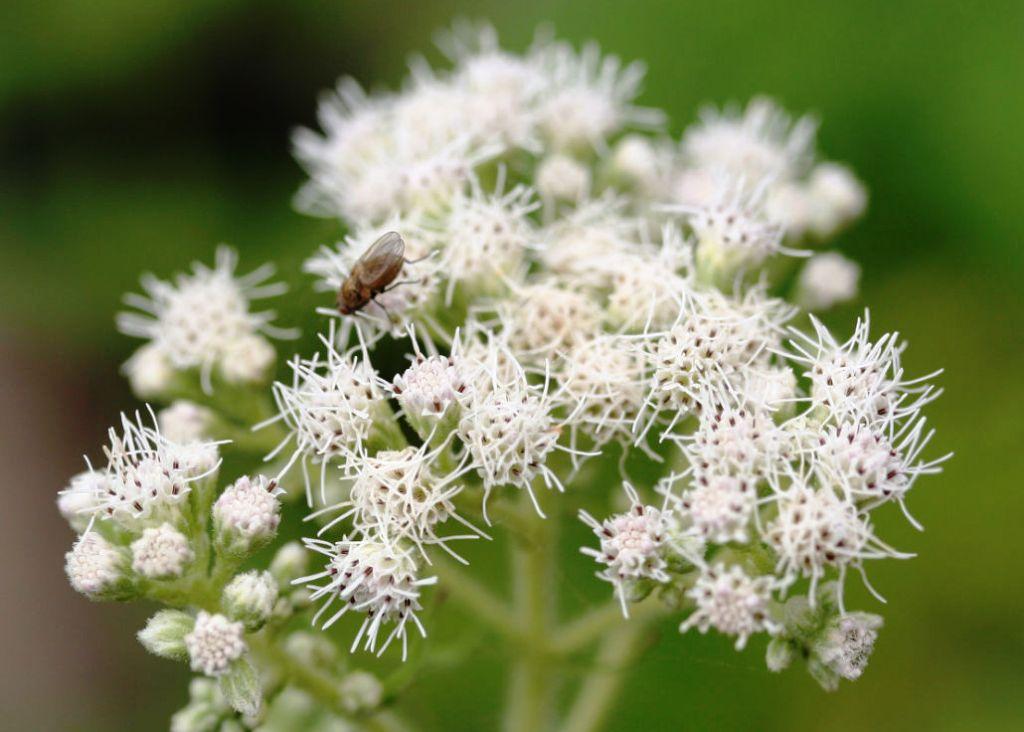 гомеопатические препараты от аллергии список