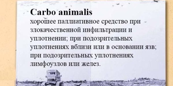 Carbo animalis