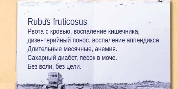 Rubus fruticosus1