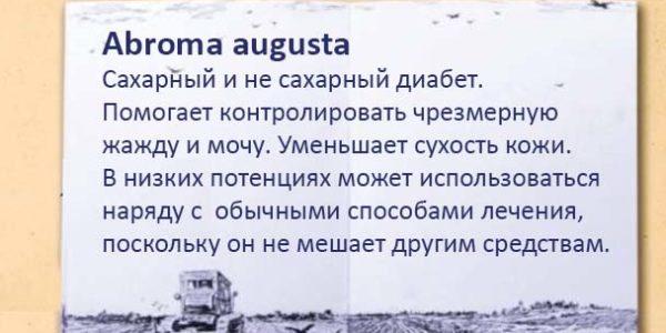 abroma augusta1