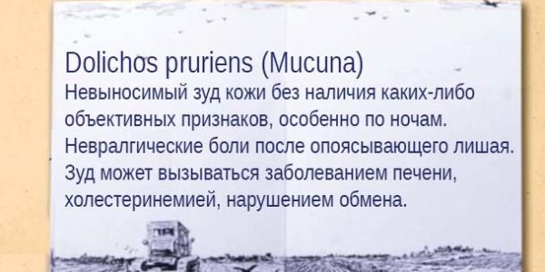 Dolichos
