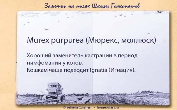 murex2
