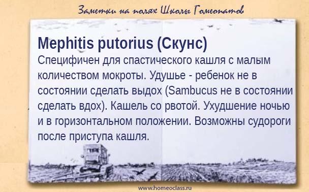 Mephitis